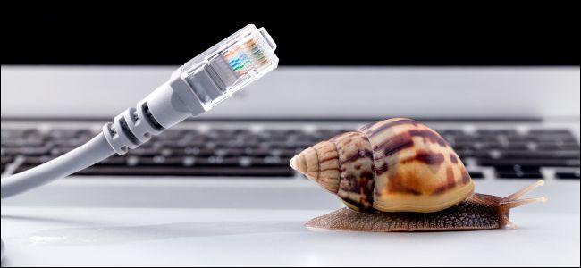snail_speed